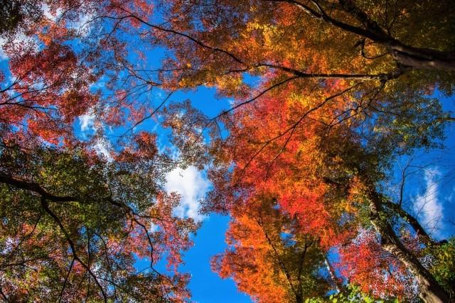 [登山・東京]CROSS  紅葉の関東百名山 御岳山‐大岳山 2021.11.21(日)